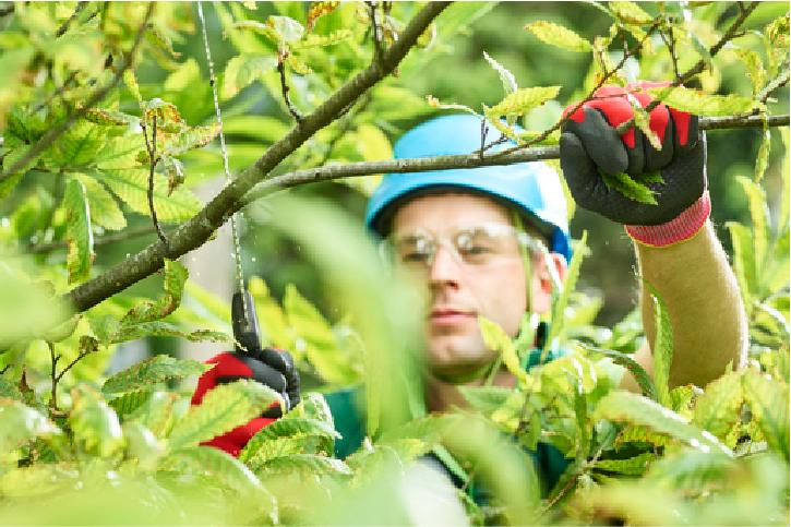 arborist in san mateo