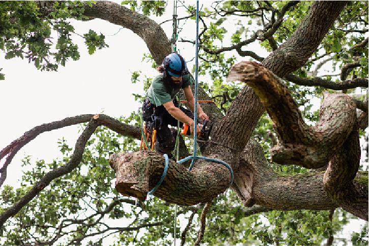 emergency tree service near me