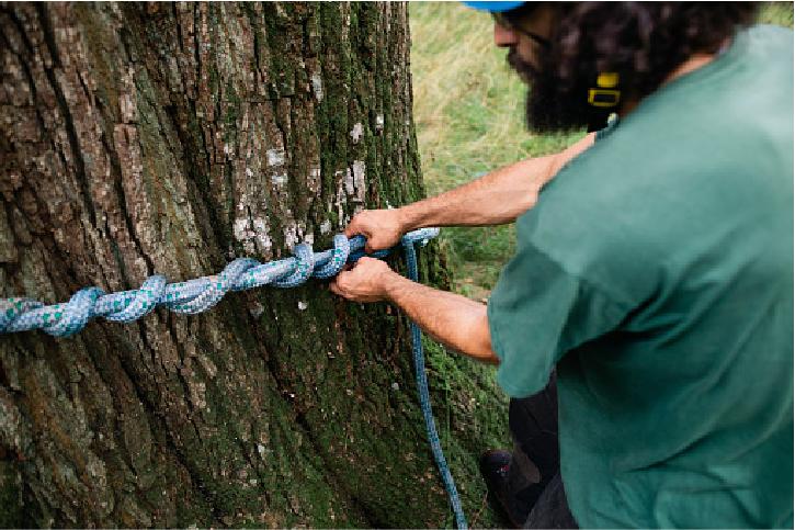 emergency tree service san mateo ca
