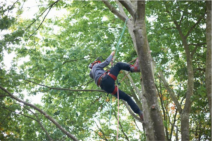 emergency tree service san mateo