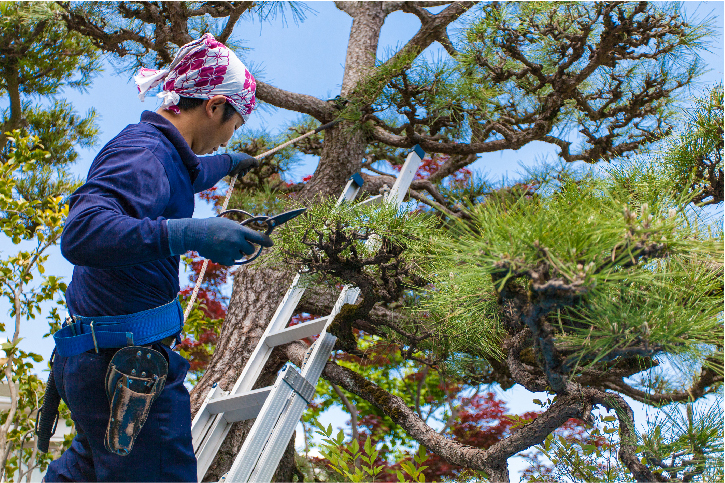 tree removal in san mateo