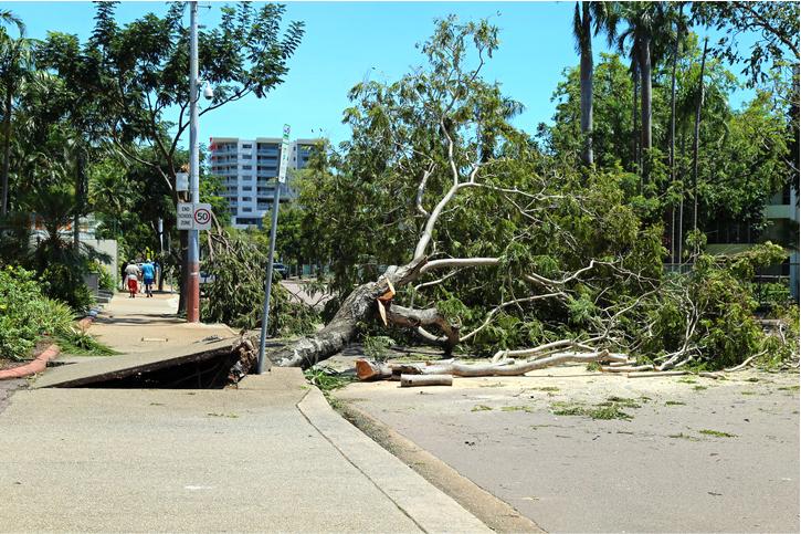 tree removal san mateo