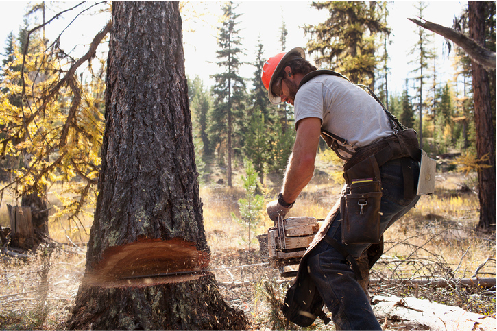 tree service in san mateo ca