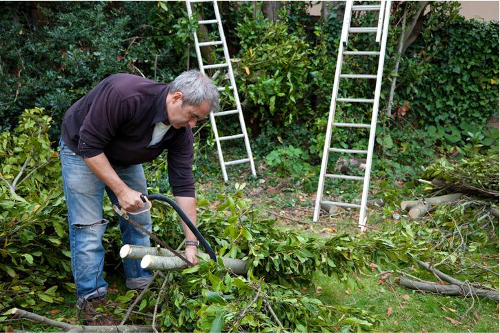 tree service in san mateo