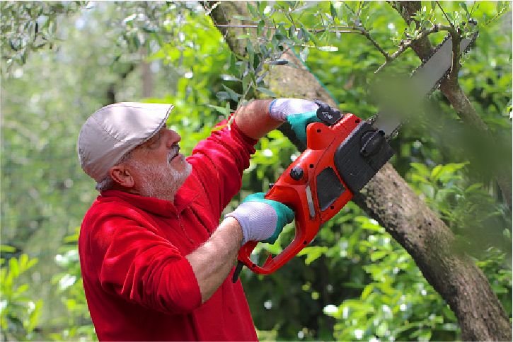 tree services in san mateo ca